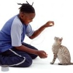 Can We Really Train A Cat? Is It Worth The Trouble?