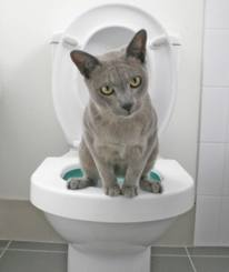 Cat Toilet Training Guide