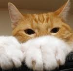 Things to Consider Before Declawing your Cat