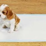 Tips For Getting Your Dog Toilet Trained