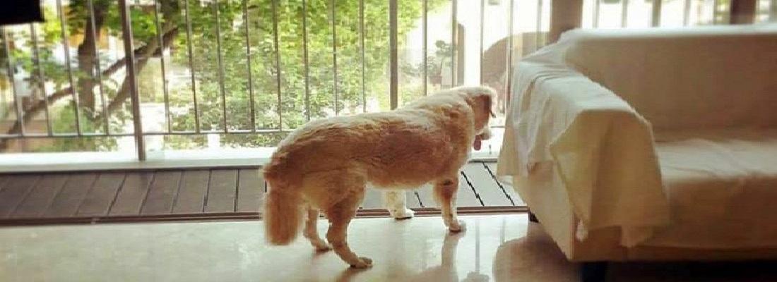 Dog sitting singapore