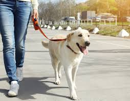 dog-walking singapore-benefits