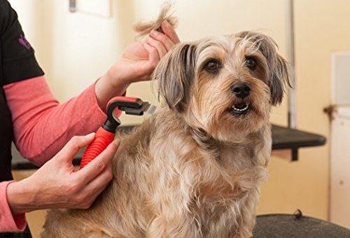 Groom your pet effortlessly.