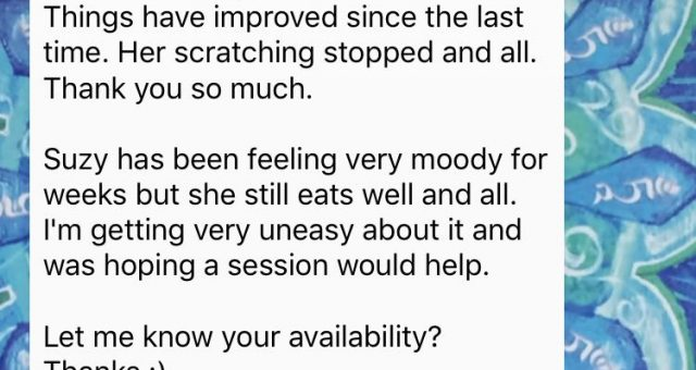 Animal communication testimonial Ginny